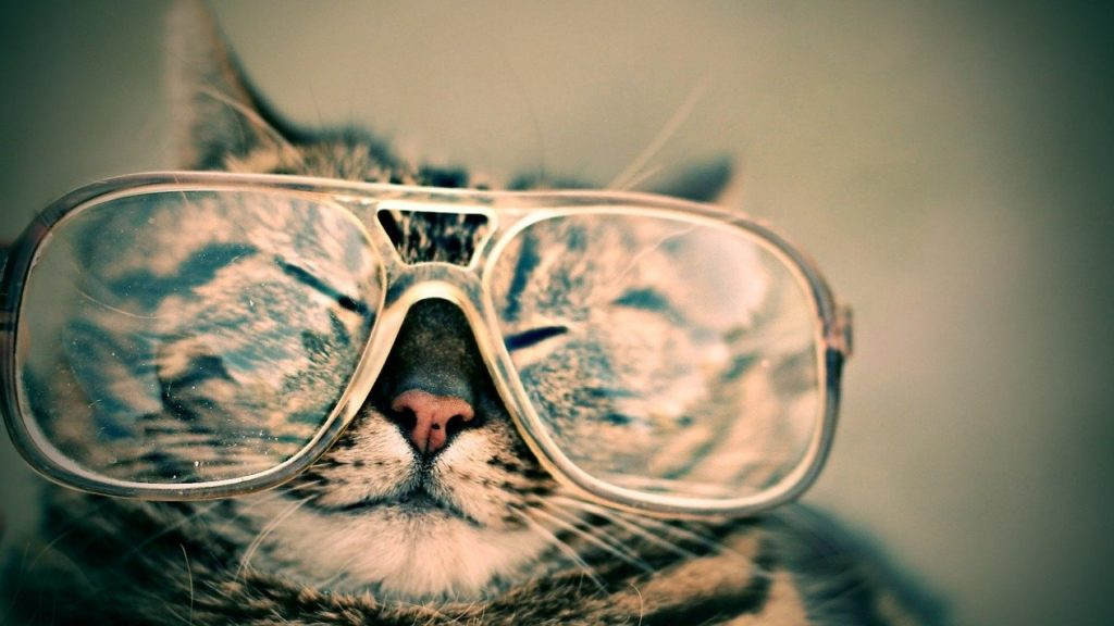 cute cat wearing glasses